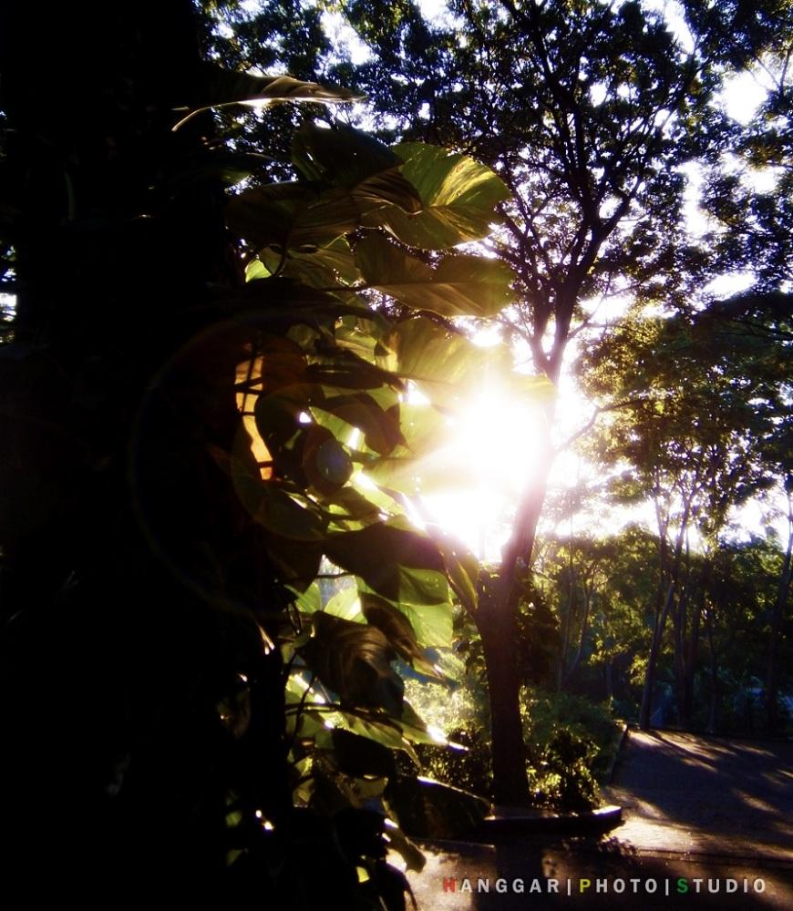 Art of Sun Session 08 - Jogging Sambil Berburu Foto di Taman Dayu (3/6)