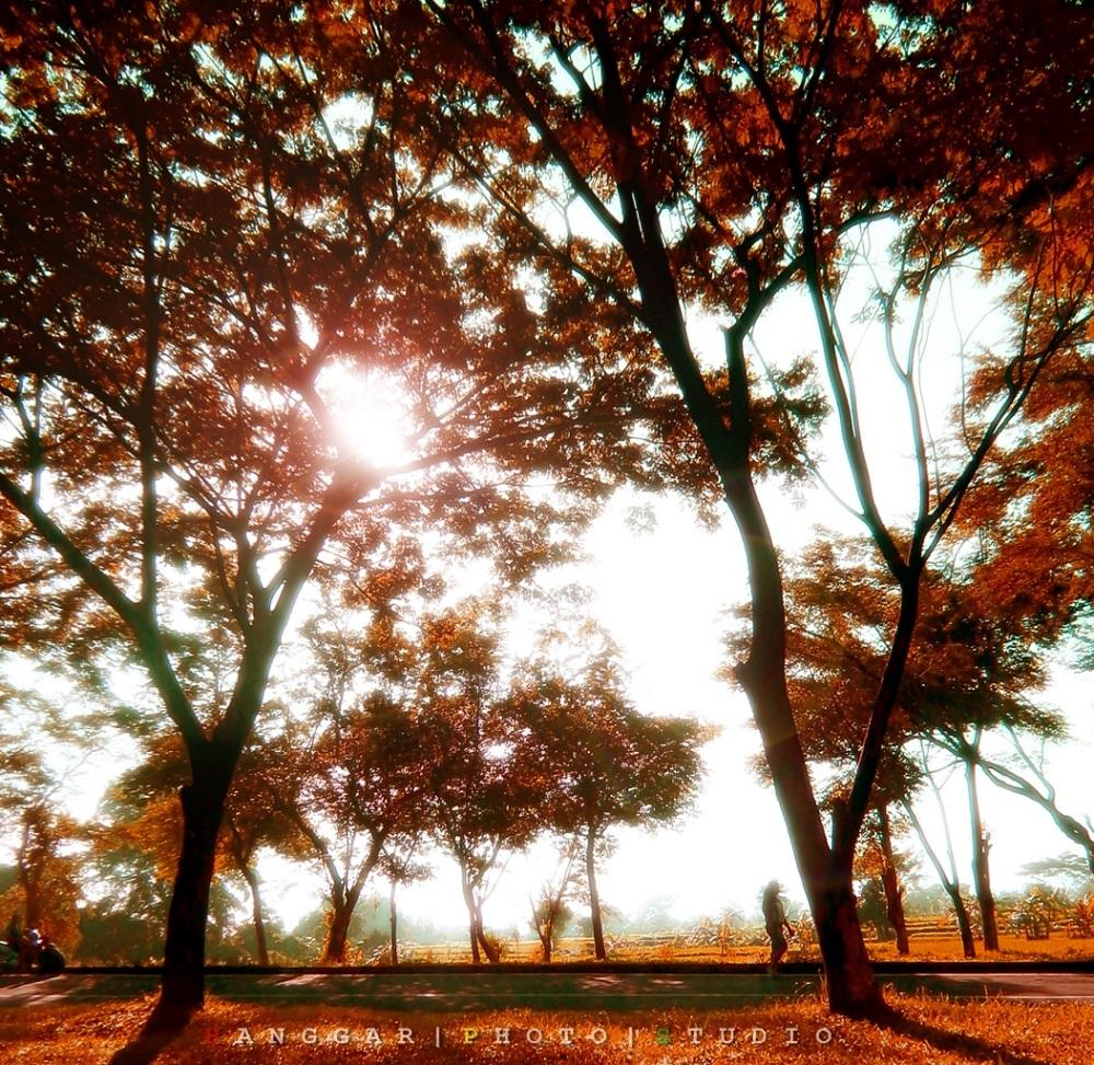 Art of Sun Session 08 - Jogging Sambil Berburu Foto di Taman Dayu (2/6)